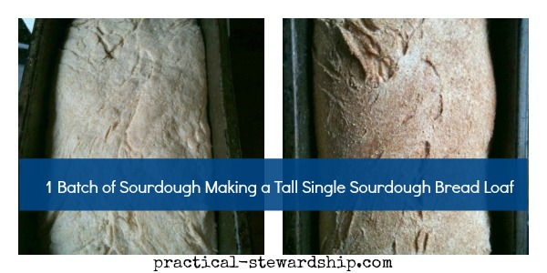 Single Sourdough Bread @ practical-stewardship.com
