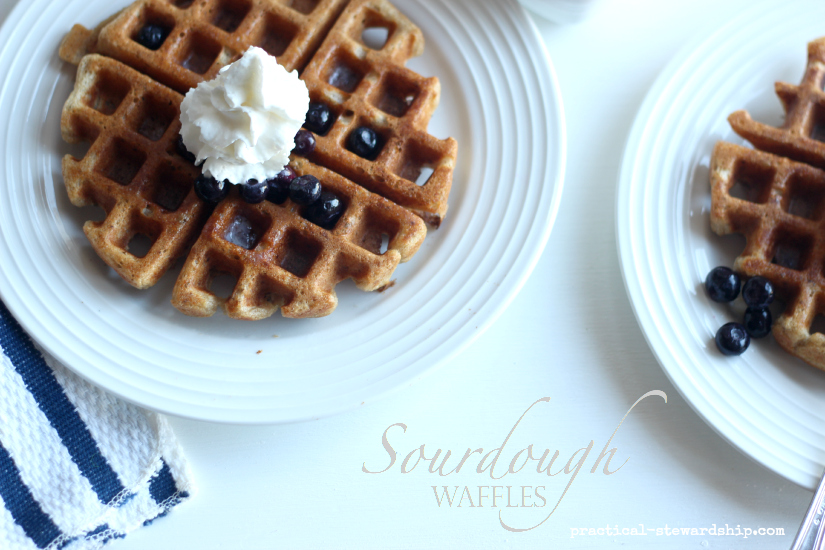 Sourdough Waffles with Blueberries