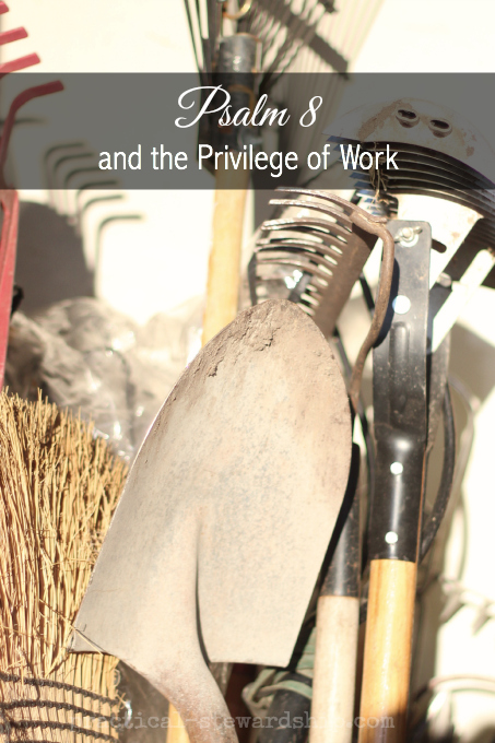 Psalm 8  and the Privilege of Work