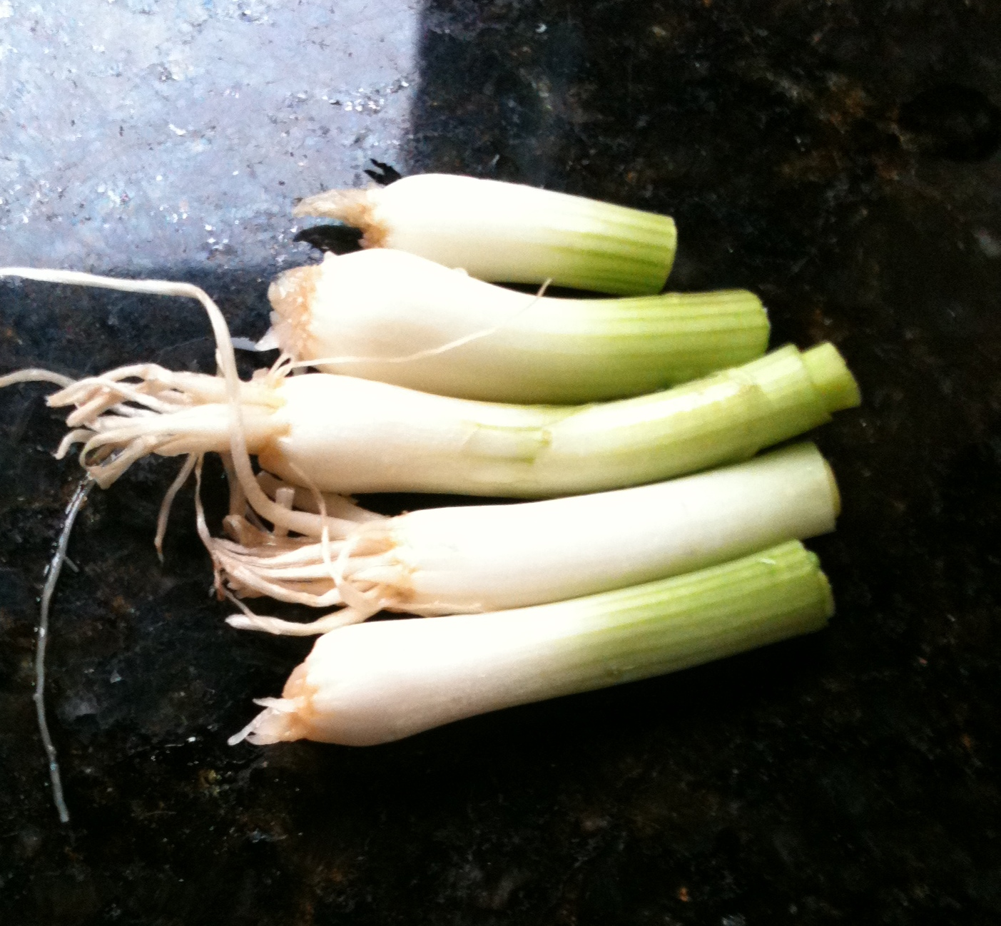 DIY: Grow Your Own Green Onions In the Windowsill