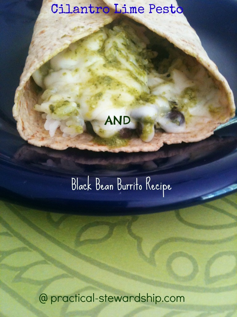 Cilantro Lime Pesto and Black Bean Burrito