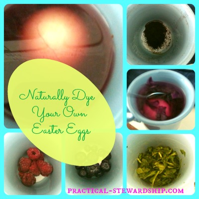 Naturally Dye Your Own Easter Egg Collage
