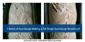 Single Sourdough Bread @ practical-stewardship.com