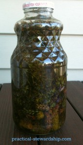 Lavender Infused Oil