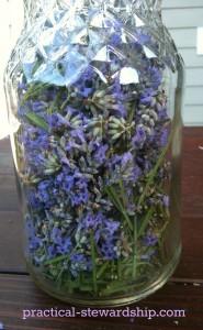 Lavender in a bottle