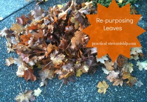 Re-purposing Leaves @ practical-stewardship.com