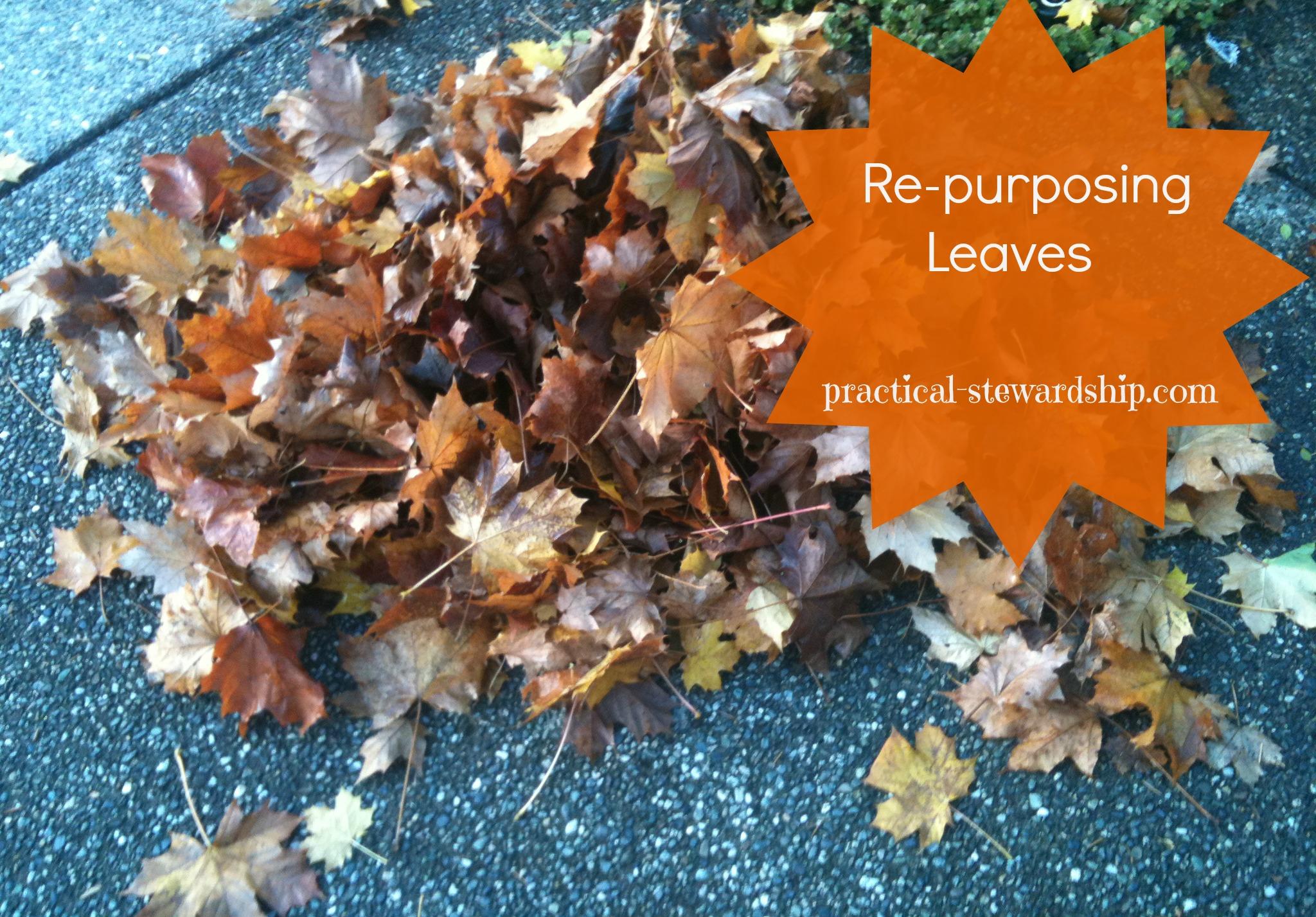 Re-purposing Leaves to Keep Down Those Weeds