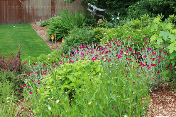 Wise Planting Tip from an Organic Farmer, Our Garden in Pictures ...