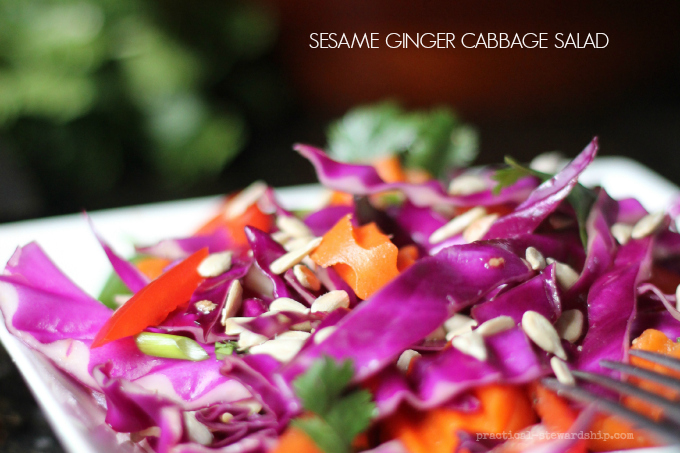 SESAME GINGER CABBAGE SALAD Closeup